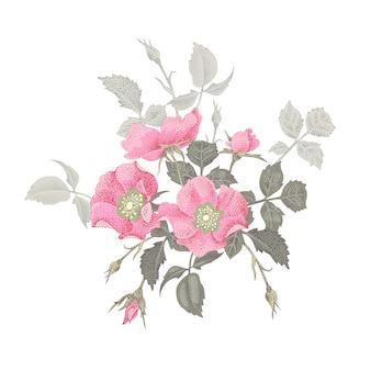 Vektor-illustration blumenstrauß aus rosen.