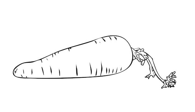 Vektor-illustration, isolierte karotte mit einem schwanz in schwarz-weiß-farben, umriss handgemalte zeichnung