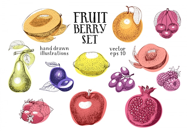 Vektor-illustrationssatz der früchte hand gezeichneter