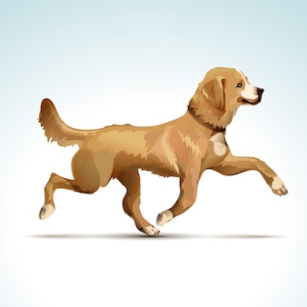 Vektor labrador retriever hund