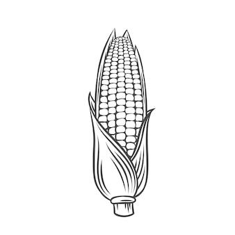 Vektor maiskolben. bauernhof-gemüse-umriss-symbol, monochrome darstellung zeichnen