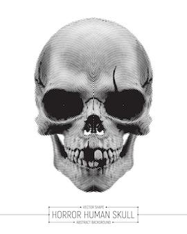 Vektor-menschlicher grausigkeits-schädel art illustration isolated