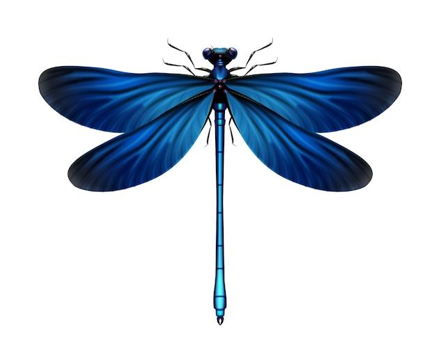 Vektor realistische blaue calopteryx jungfrau libelle nahaufnahme oben ansicht lokalisiert auf weißem hintergrund