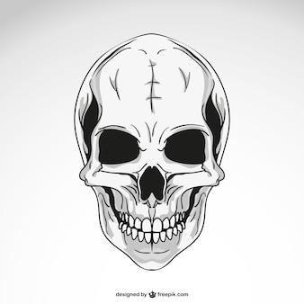 Vektor-schädel-vorlage zeichnung