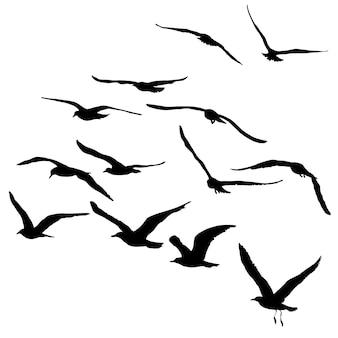 Vektor-silhouetten von fliegenden möwen isolierte vögel schwarzer umriss