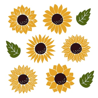 Vektor sonnenblumen set isoliert auf weiß