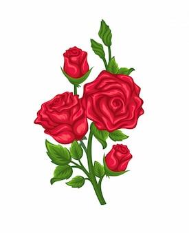 Vektor von niederlassungen von roten rosen lokalisiert auf einem weißen hintergrund.