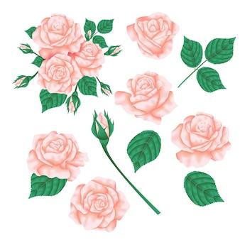 Vektorblumenmuster: rosa pfirsich des gartens rosen-blume