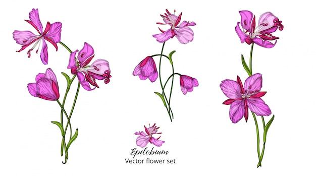 Vektorblumensatz, mit rosa empfindlichen blumen