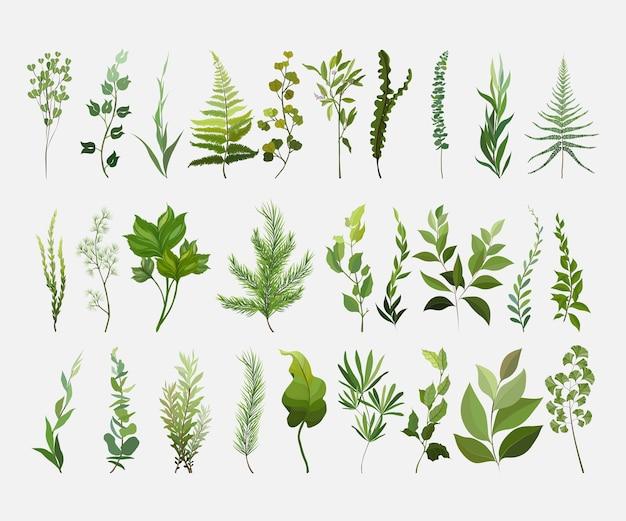 Vektordesignerelemente setzen sammlung des grünen waldfarns.