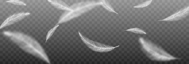 Vektorfedern auf einem isolierten transparenten hintergrund fallende federn png fliegende federn png