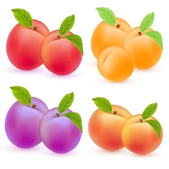 Vektorfrüchte und beeren eingestellt saftiger apfel pfirsich pflaume aprikose sommer- oder herbsternte