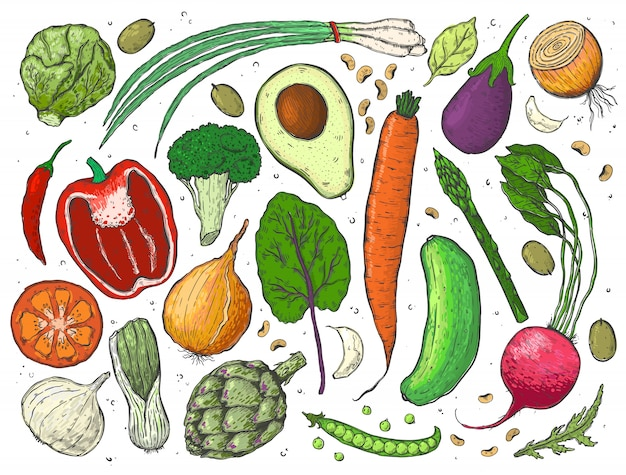 Vektorgroßes set gemüse in einer skizze.