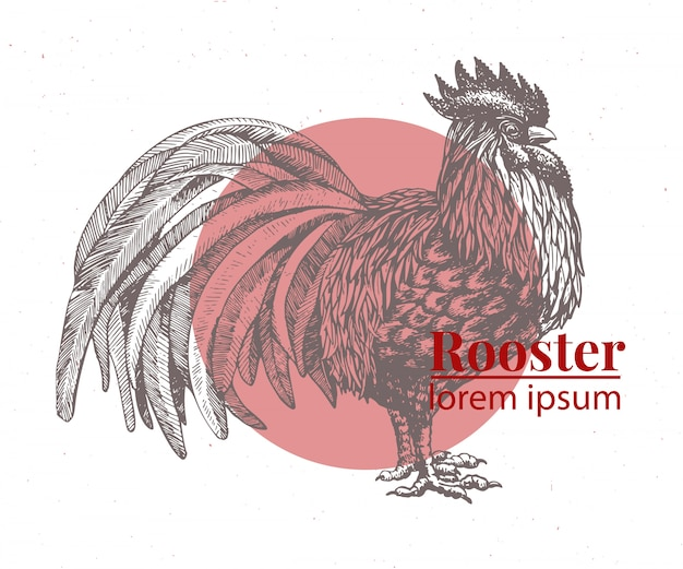 Vektorhand gezeichnete hühnerillustration.