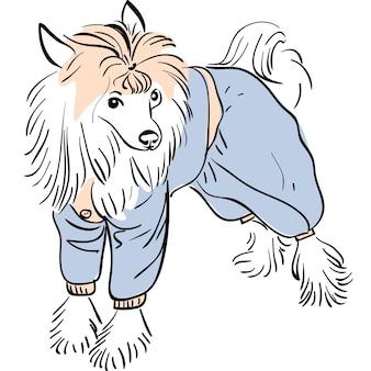 Vektorhund chinesische schopfrasse