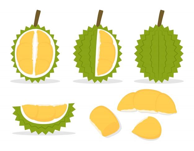 Vektorillustration des satzes frischer durian