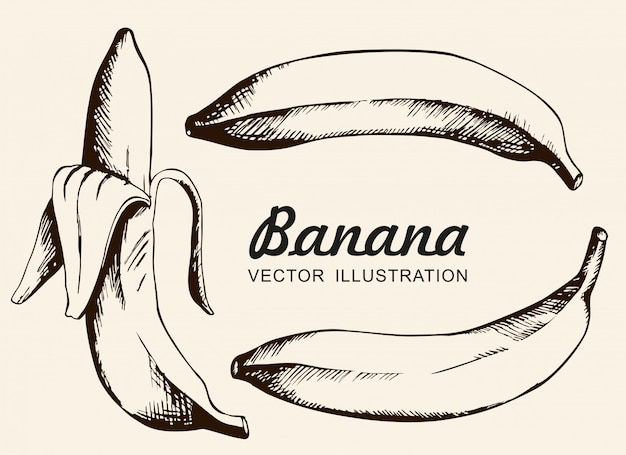 Vektorsatz bananen. einzelne banane, geschälte banane. tintenzeichnung, vektor, isolat.
