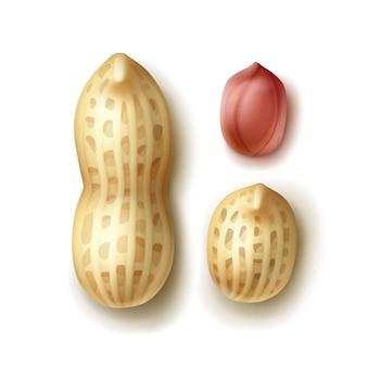 Vektorsatz der ganzen erdnüsse mit schale schließen oben draufsicht lokalisiert auf weißem hintergrund