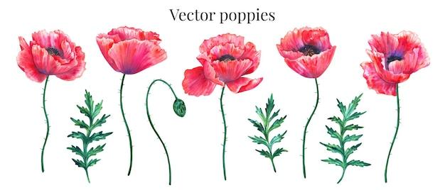 Vektorsatz der roten mohnblumen mit blättern und knospe.