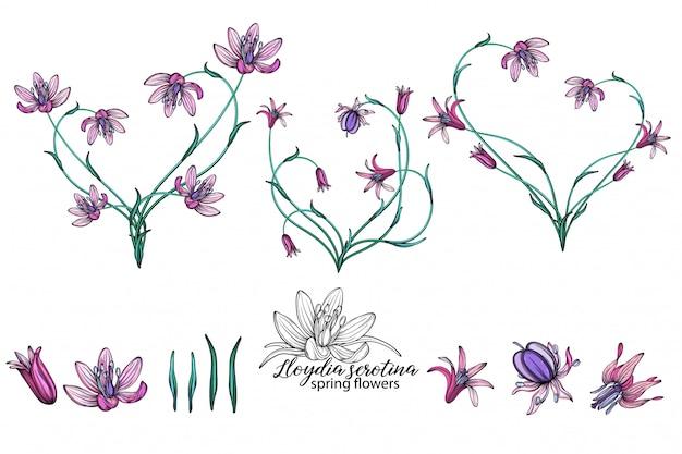 Vektorsatz der zarten frühlingsblumen. blumen. frühlingsblumen. herz aus blumen.