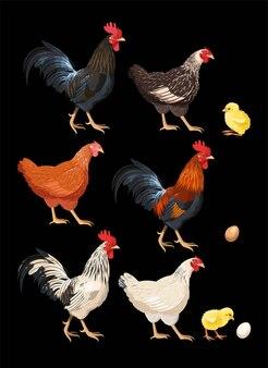 Vektorsatz hochdetaillierte hühner