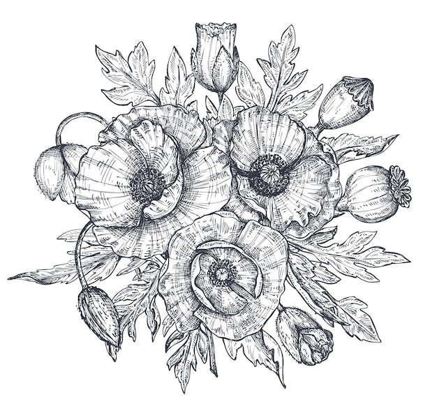 Vektorschwarzweiss-blumenzusammensetzung, blumenstrauß von hand gezeichneten mohnblumen, knospen und blättern in der skizzenart lokalisiert auf weißem hintergrund. schöne illustration für frühlingsdesign oder malbuch.