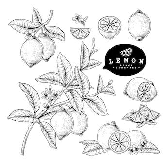 Vektorskizze zitrusfrucht dekoratives set. zitrone. handgezeichnete botanische illustrationen. schwarzweiss mit strichgrafiken lokalisiert auf weißem hintergrund. obstzeichnungen. retro-stilelemente.