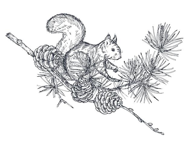 Vektorzusammensetzung mit hand gezeichnetem waldeichhörnchen-kiefernzweig und -kegeln auf weißem hintergrund