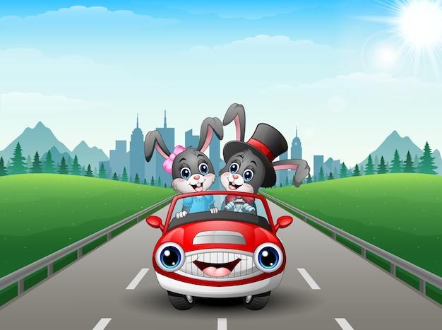 Verbinden sie die kaninchenkarikatur, die ein auto auf stadthintergrund fährt