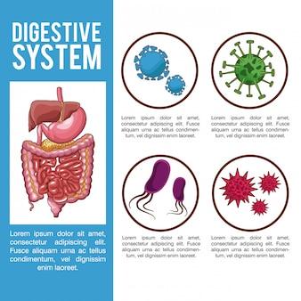 Verdauungssystem infographic mit informationen