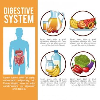 Verdauungssystem infographic
