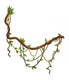 Verdrehtes wildes lianenzweigbanner. dschungelrebenpflanzen. holziger natürlicher tropischer regenwald