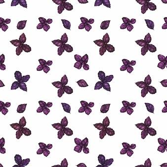 Verfolgtes nahtloses muster des aquarells mit purpurrotem basilikum