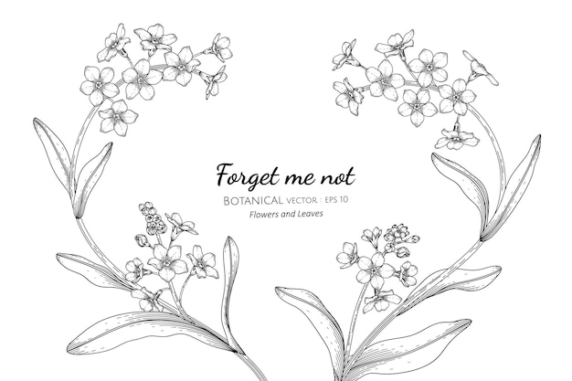 Vergessen sie mich nicht, handgezeichnete botanische illustration der blume und des blattes mit strichzeichnungen.