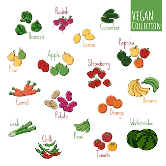 Verschiedene arten des vektors des frischgemüses und der früchte.