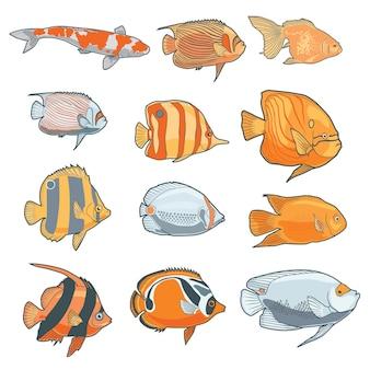 Verschiedene arten von fischen, lokalisiert im weißen hintergrund