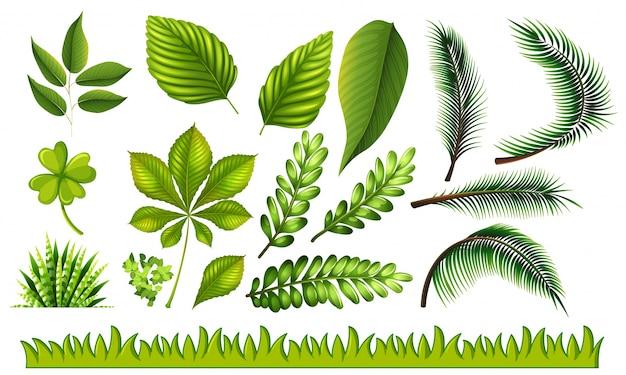 Verschiedene arten von grünen blättern und gras illustration