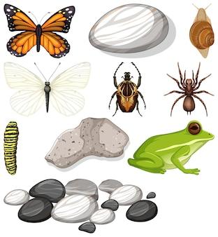 Verschiedene arten von insekten mit naturelementen