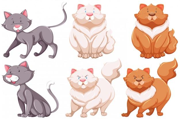 Verschiedene arten von katzen