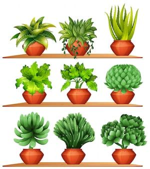 Verschiedene arten von pflanzen in tontöpfe illustration