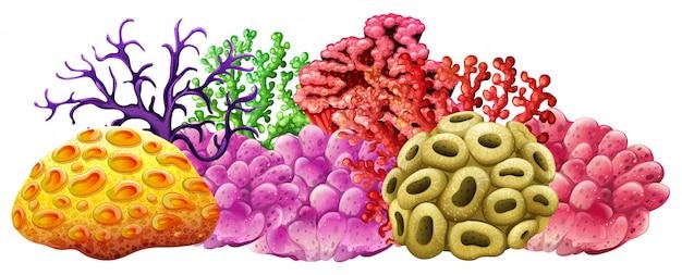 Verschiedene farben des korallenriffs