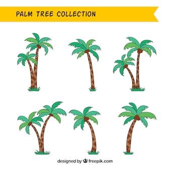 Verschiedene hand gezeichnete palmen mit kokosnüssen