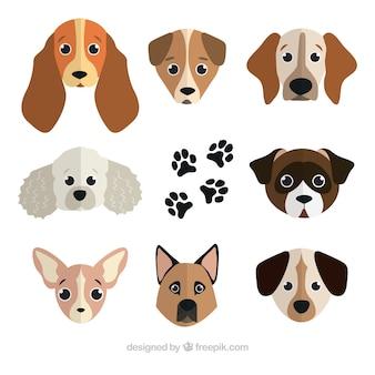 Verschiedene hunde verschiedener rassen in flacher bauform