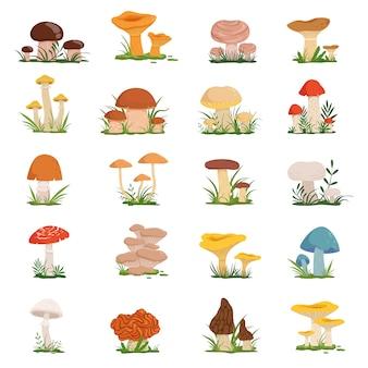 Verschiedene pilze auf grünem gras. vektor festgelegt