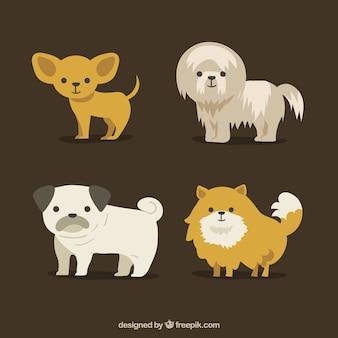 Verschiedene süße hunde