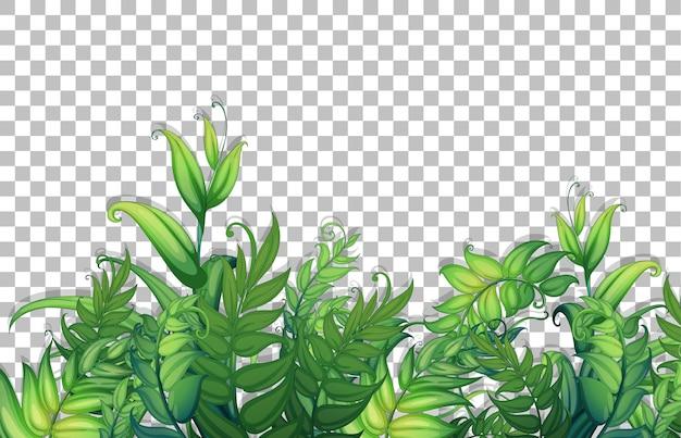 Verschiedene tropische blätter auf transparentem hintergrund
