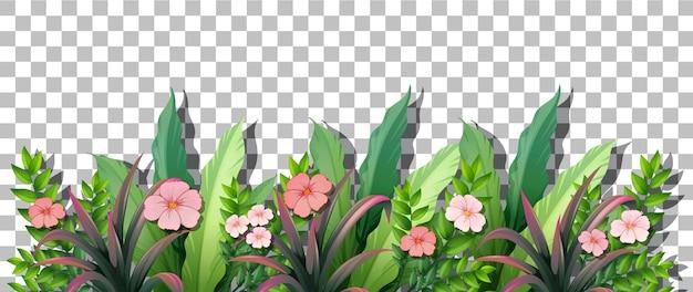 Verschiedene tropische pflanzen auf transparentem hintergrund