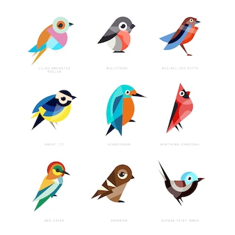 Verschiedene vögel gesetzt, fliederbrustwalze, dompfaff, rotbauch pitta, kohlmeise, eisvogel, nördlicher kardinal, bienenfresser, spatz, herrlicher zaunkönig illustrationen