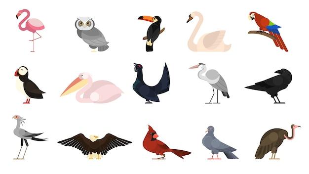 Verschiedene vogelsets. sammlung von wildvögeln