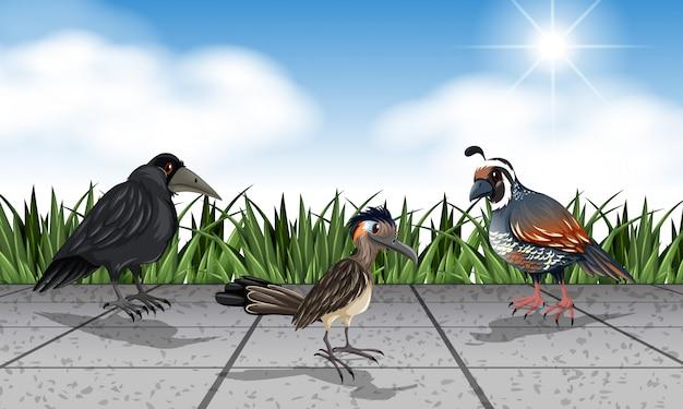 Verschiedene wilde vögel auf der straße